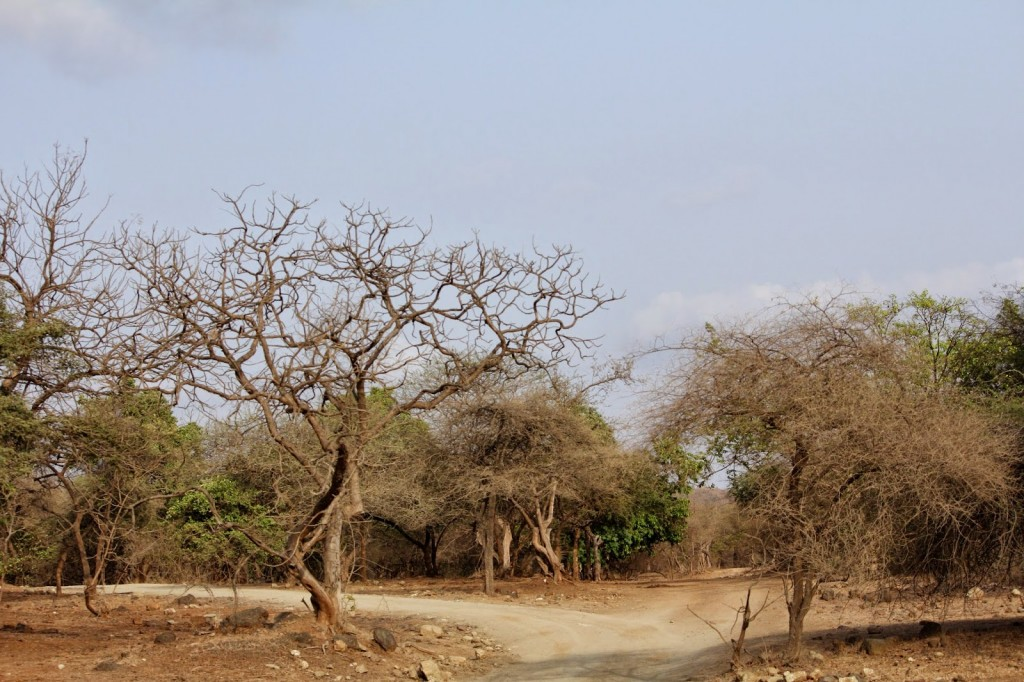 Gir Forest National Park: Summer is the best time for sighting