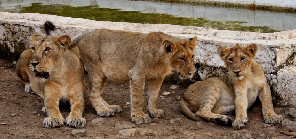 Gir Forest National Park: Family time