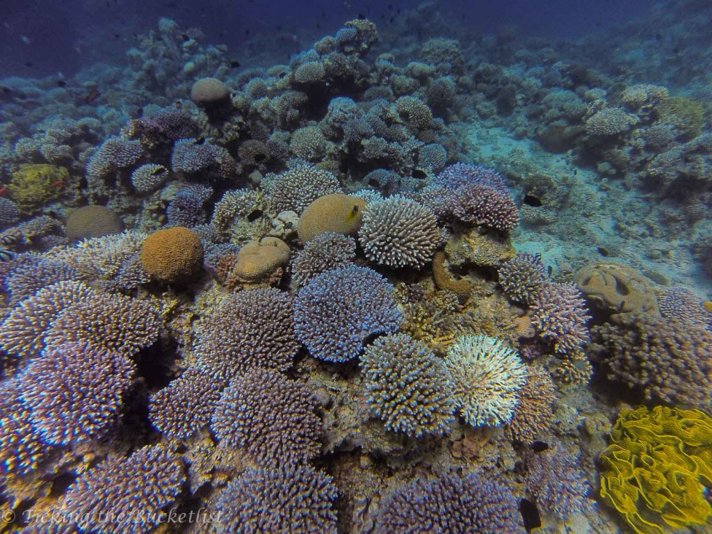 Coral garden at South Beach - great for snorkelling and diving