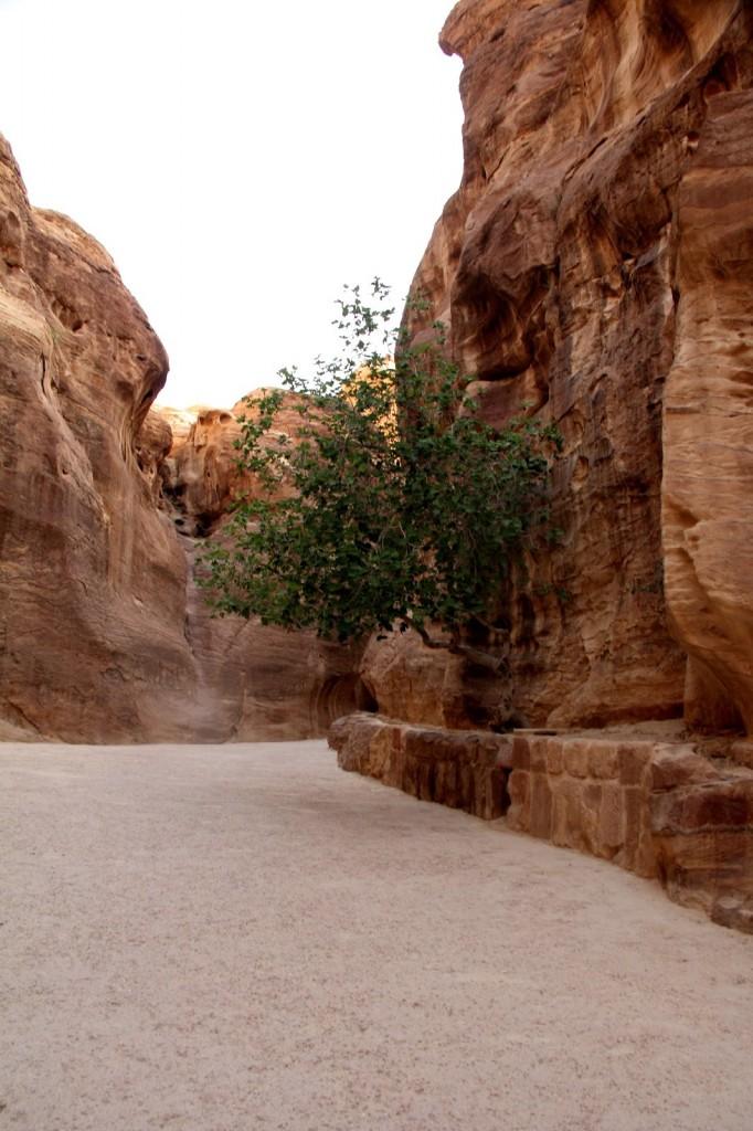 Petra: Walking through the Siq