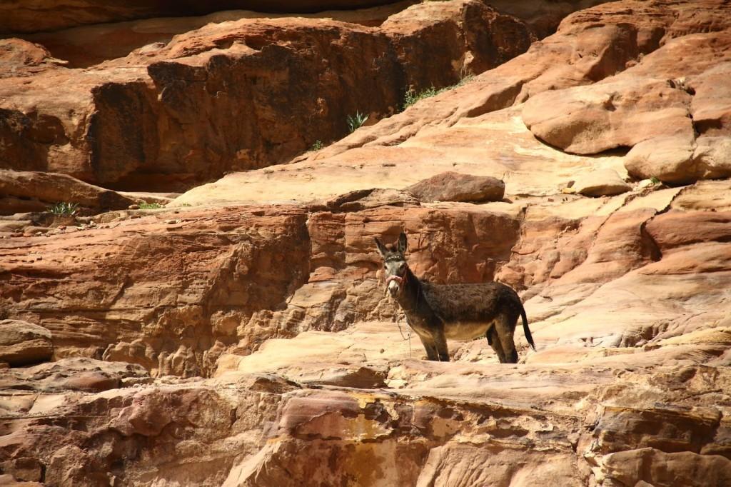 Petra: This braying donkey reminded me of 'Donkey' in the movie Shrek