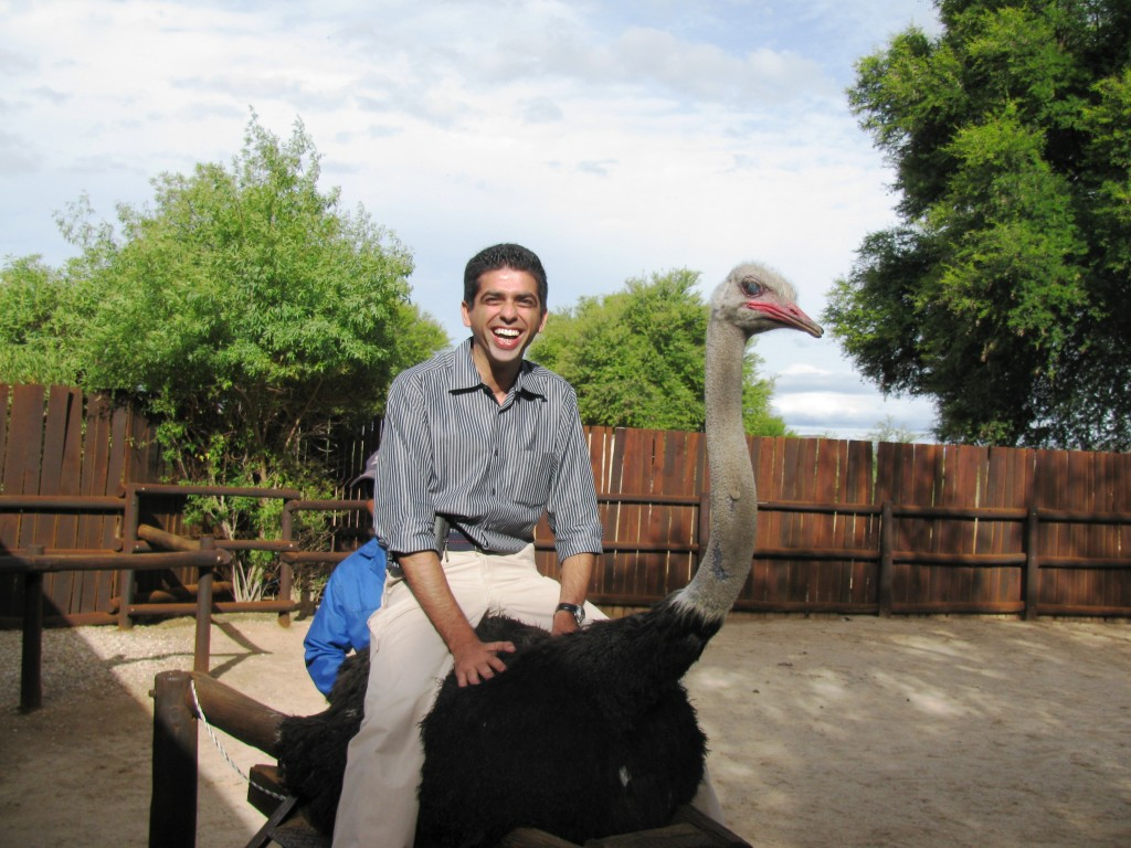 Oudtshoorn: Ostrich ride