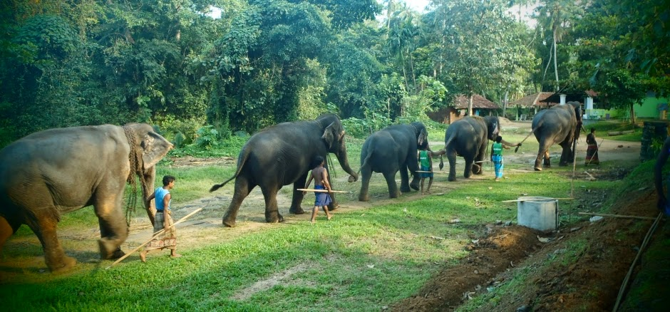 Millennium Elephant Foundation: The herd (pic courtesy: MEF)