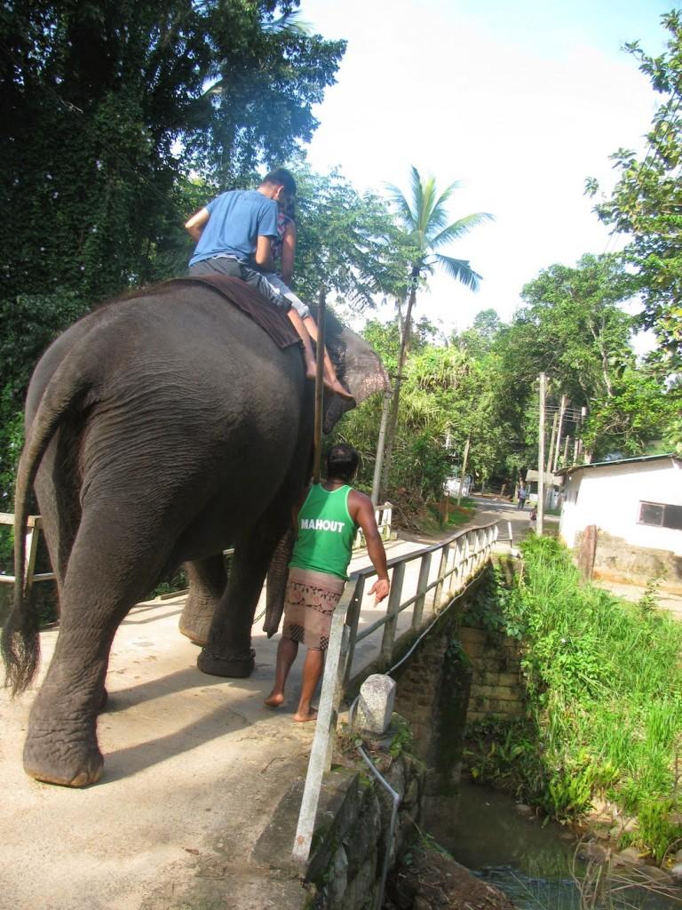 Millennium Elephant Foundation: Lakshmi catwalks the bridge