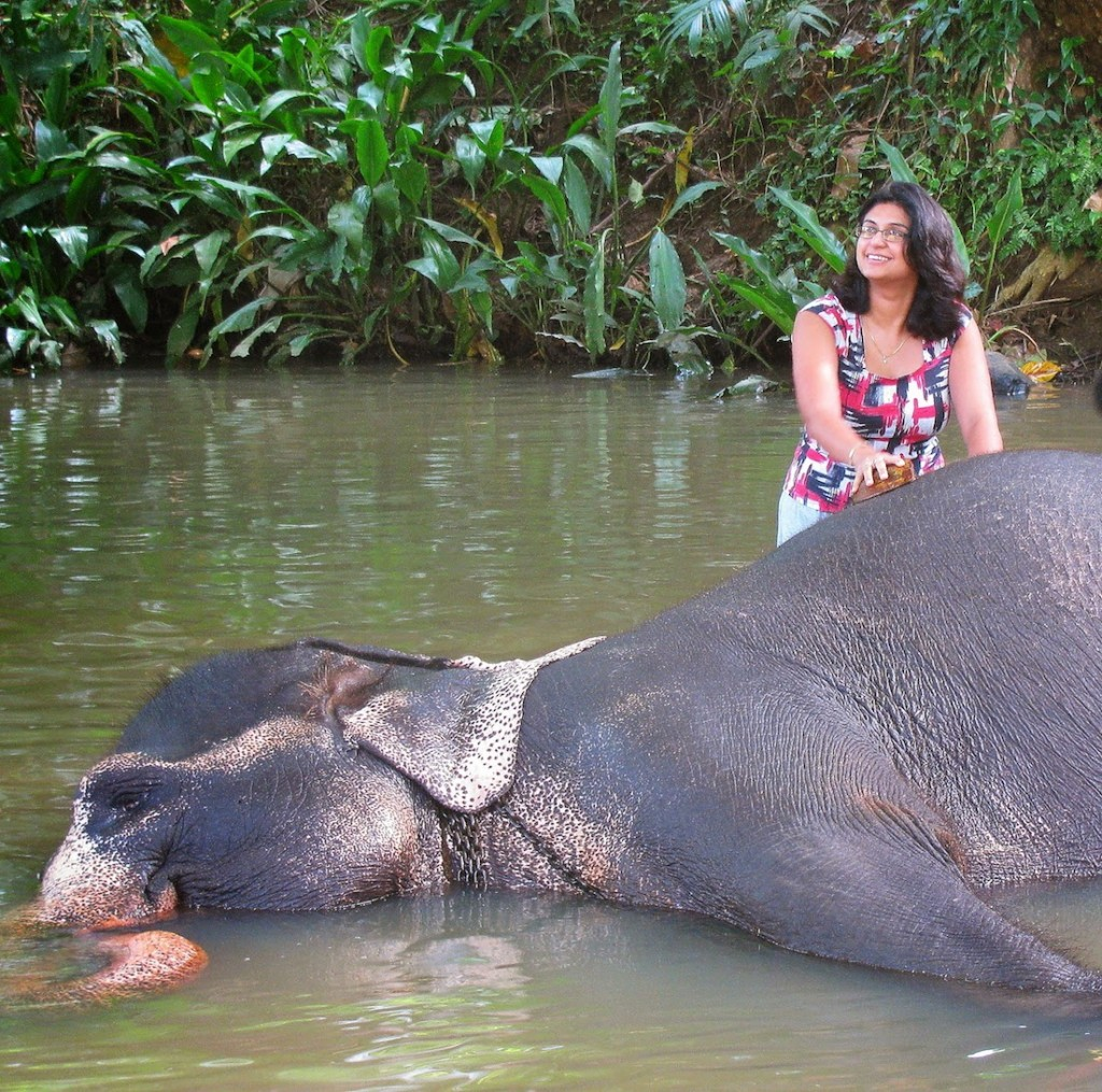 Millennium Elephant Foundation: Lakshmi enjoying her spa treatment
