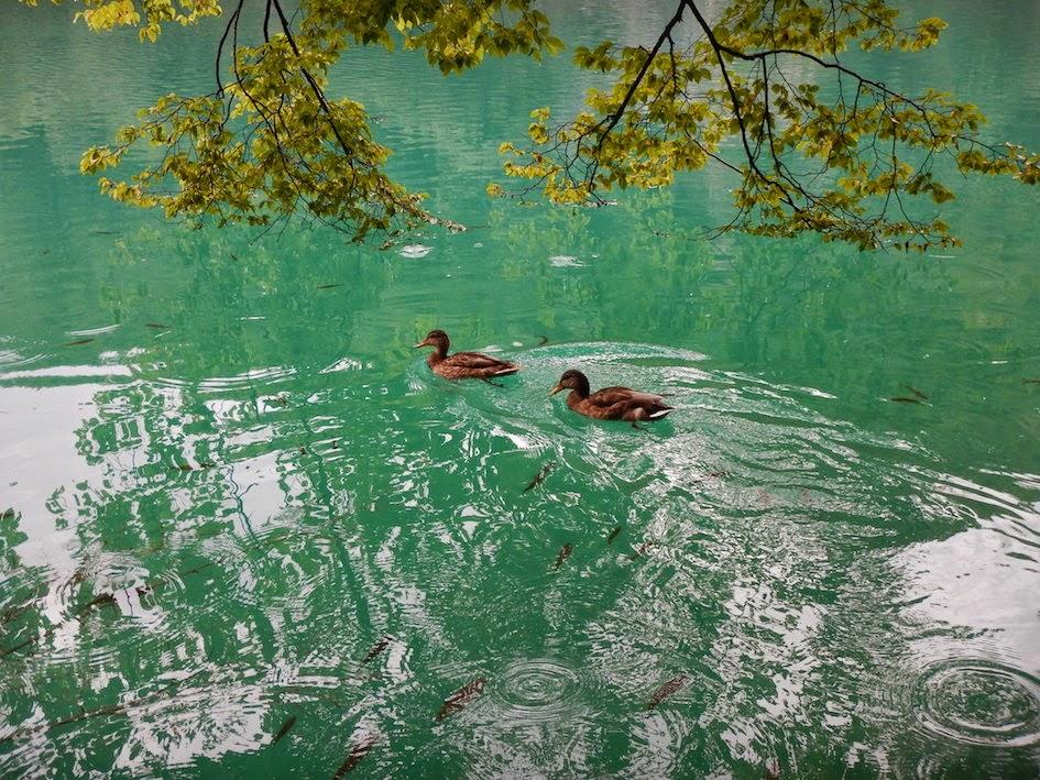 Plitvice National Park: Flora and fauna