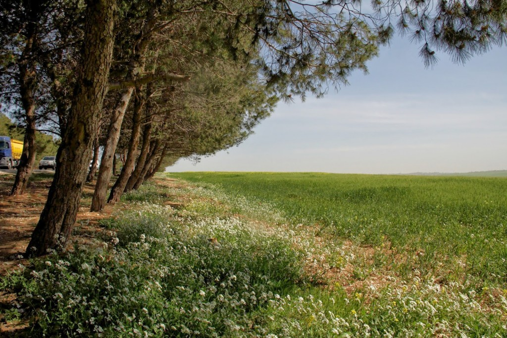 Madaba: Scenic drive from the Queen Alia International Airport to Madaba