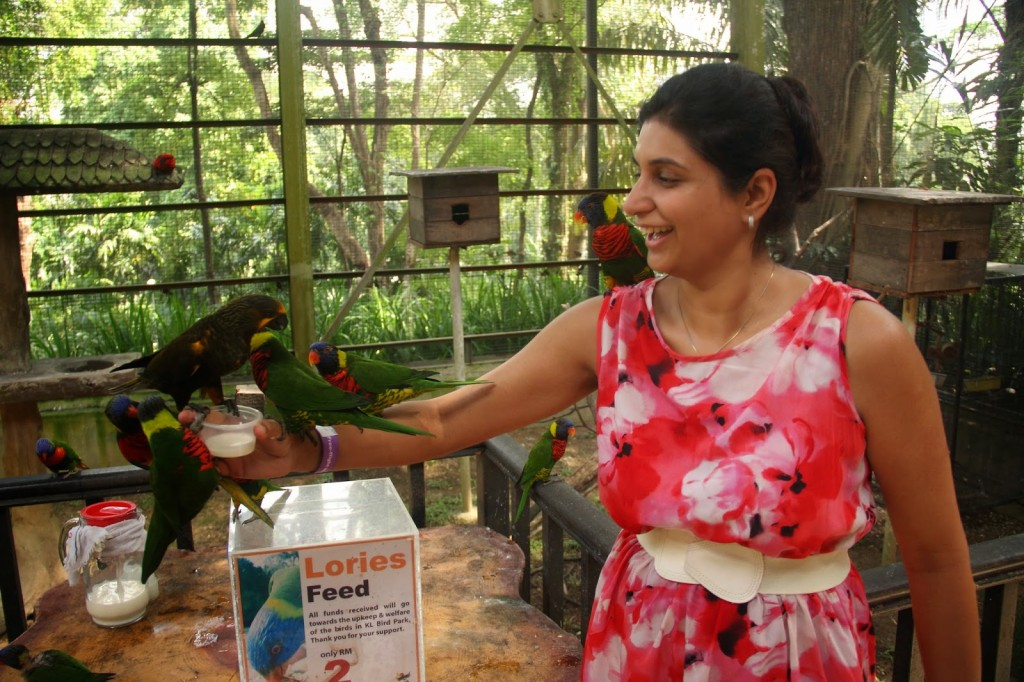 Feeding the lorries (a kind of parrot)!