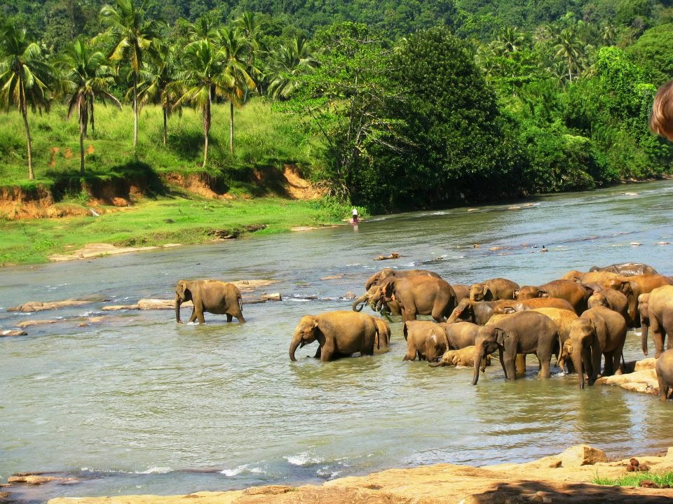 Elephants frolicking in water at the Maha Oya river