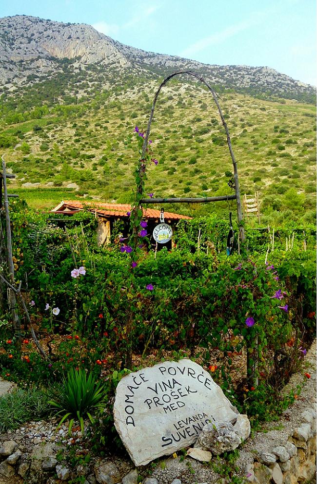 A small vineyard at Hvar