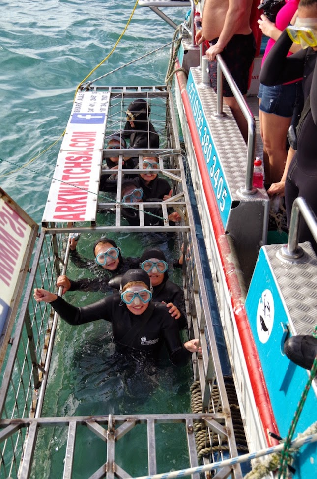 Avec wet suits and masks (pic courtesy: www.sharkwatchsa.com)