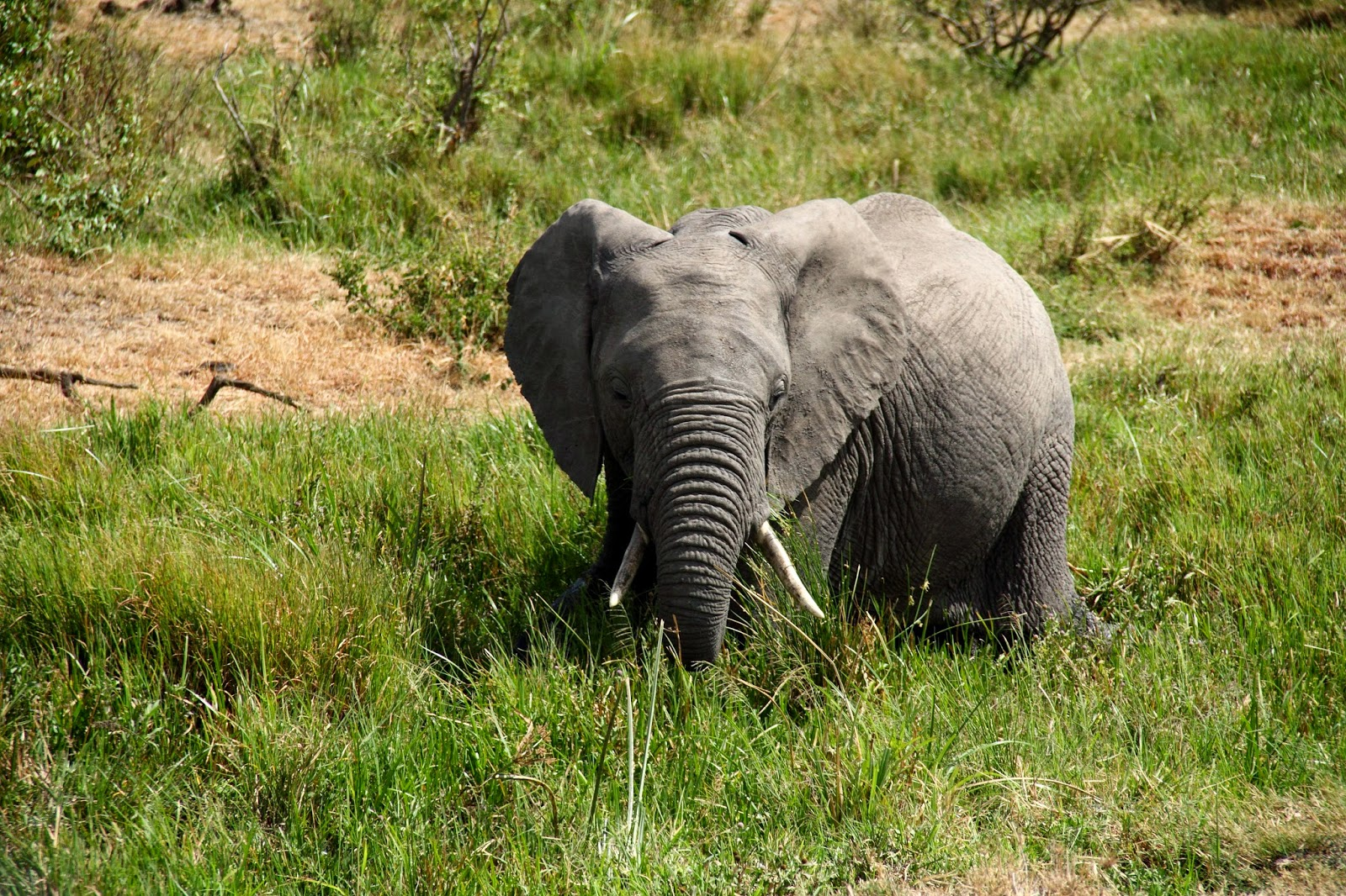 A playful tusker at Masai Mara
