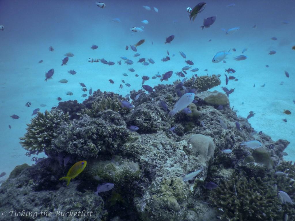 Under the sea...house reef of Reethi Beach Resort