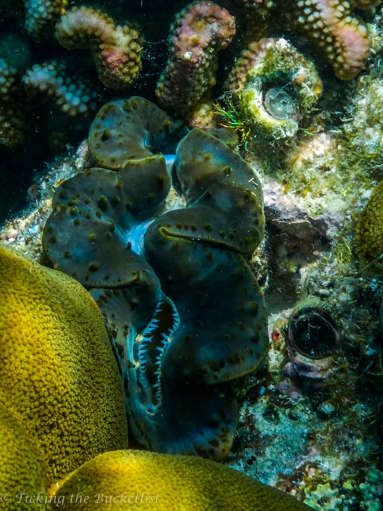 Loved the colours of this giant clam