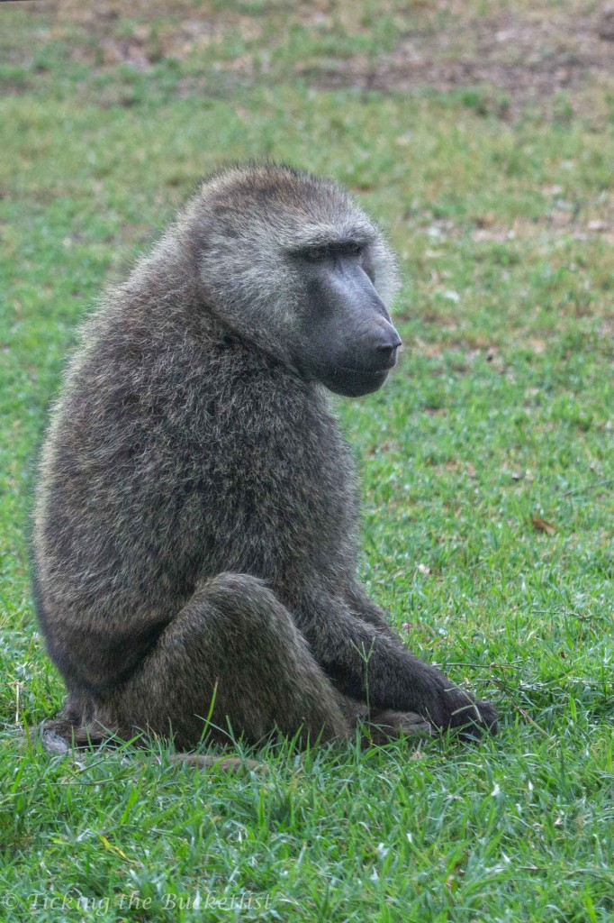 I was so so so scared of the baboon!