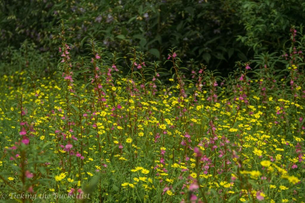 Wild flowers en route to Shillim