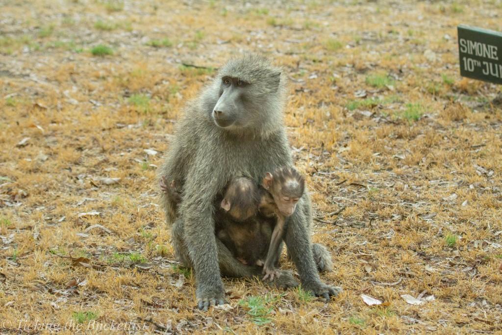 Cute little monkeys...
