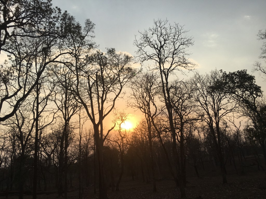 Watching the sun set behind the bare trees on a warm summer evening...