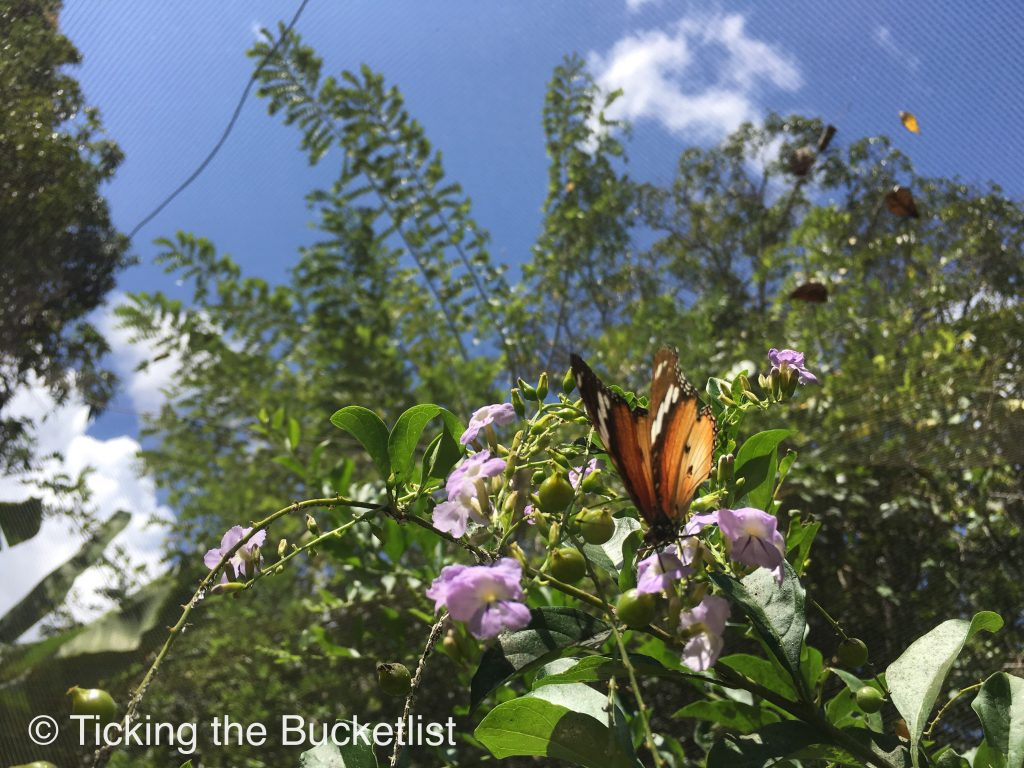 Butterflies in my stomach…literally!