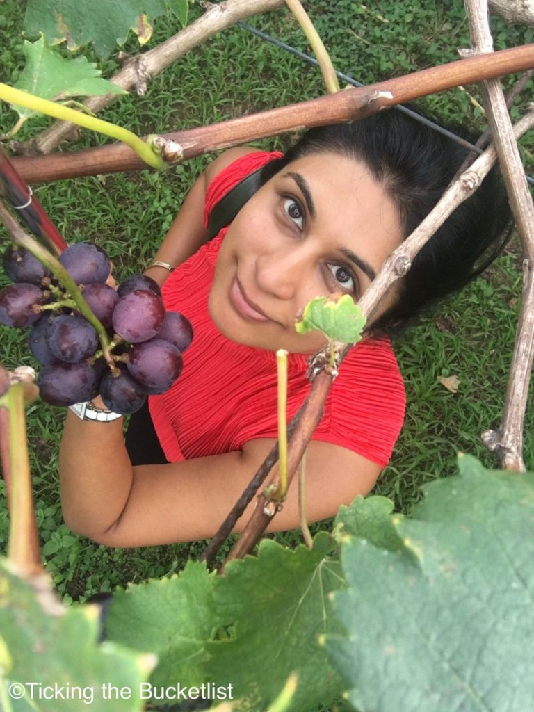 Time to pick some ripe grapes!