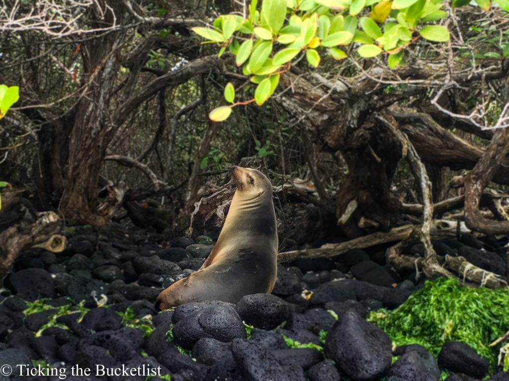 A sea lion posing on one of the uninhabited islands...